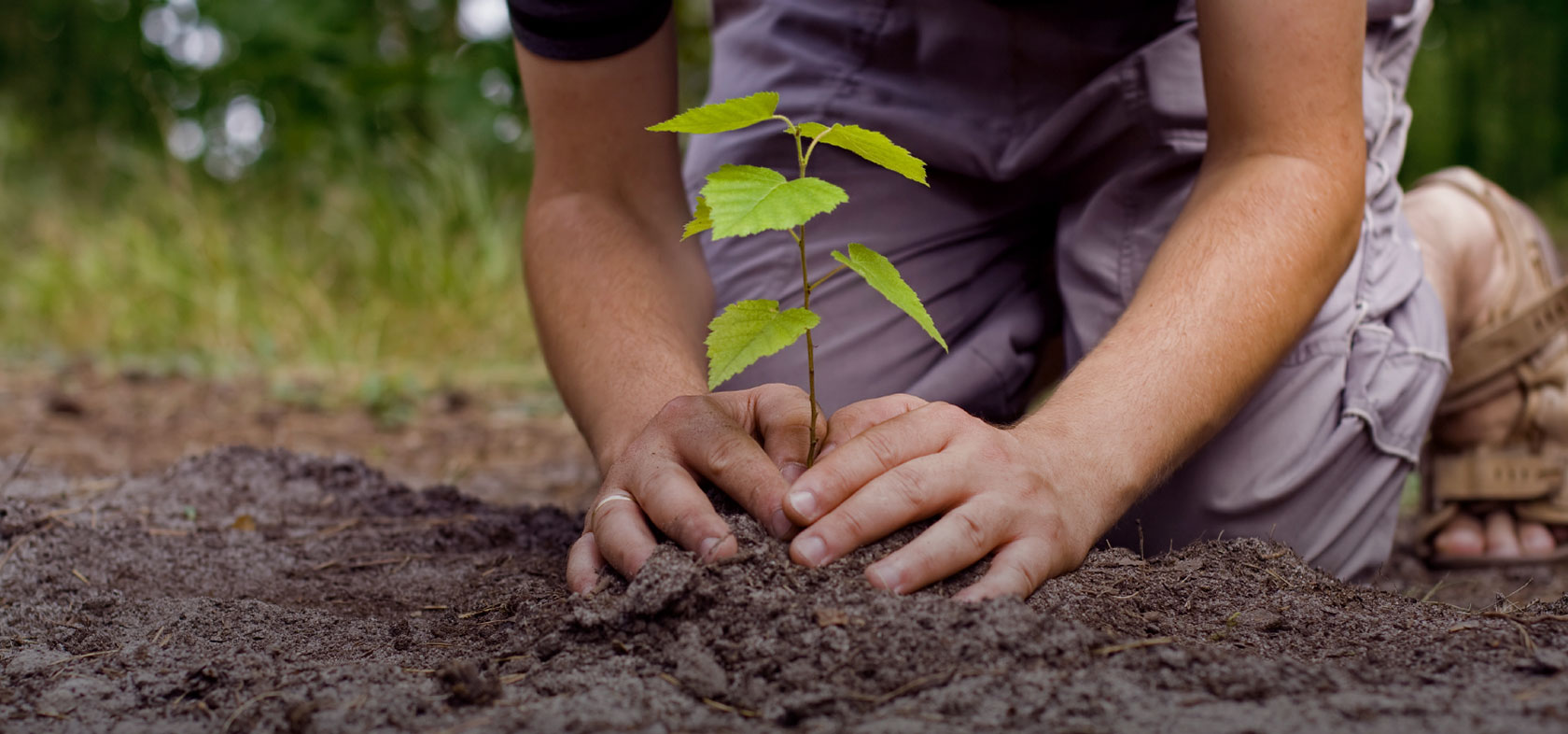 Importance of Gardening in Our life