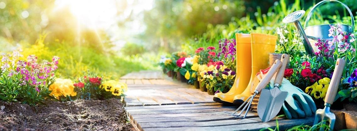 How to maintain a garden?